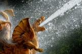 Bosquet du Dragon