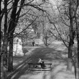 Un après-midi aux Tuileries, 1963, Kertész Andor (1894-1985)