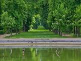 Petite gerbe- perspective sur le tapis vert