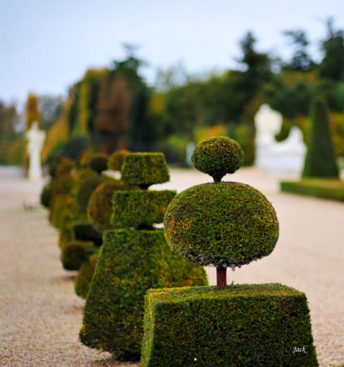 Jardiniers de versailles la taille des topiaires une for Entretien jardin versailles
