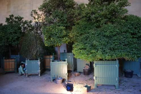 R novation des conteneurs des orangers jardins de for Entretien jardin versailles