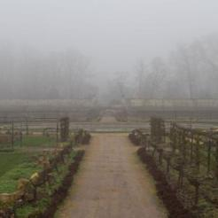 Allée dans la brume