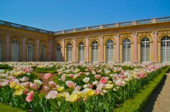 Le grand Trianon et son parterre de tulipes