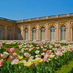 Le grand Trianon et son parterre de tulipes